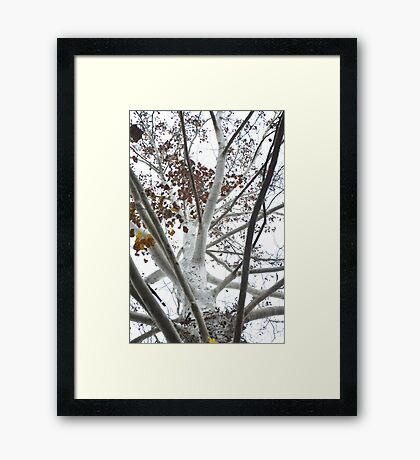 The White Tree of Gondor Framed Print