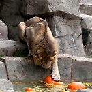 Bobbing For Pumpkins by Jarede Schmetterer