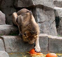 Bobbing For Pumpkins by Jarede Schmetterer