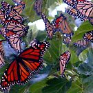 Butterfly Dream by R&PChristianDesign &Photography