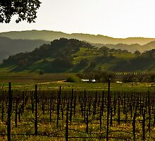 Napa Valley Panorama from the Silverado Trail by MarkEmmerson