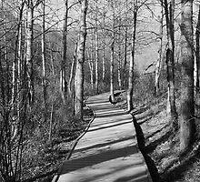B&W - Board Walk by Kellym35ca