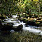 Mountain Stream I by JKStanford