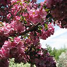 Bee On The Tree by Linda Miller Gesualdo