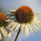 Prickly Twins by EmmaLeigh