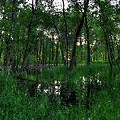 Spring Marsh by Benjamin Curtis
