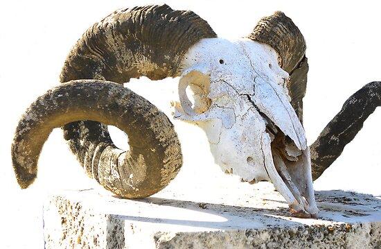 Rams Head by TeAnne