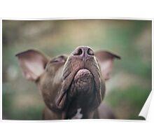 Dirt Eater...Wind Smeller Poster
