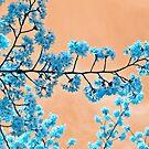 Blue Blossoms by Vittorio Zumpano