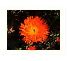 Striking Orange Art Print