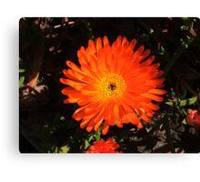 Striking Orange Canvas Print