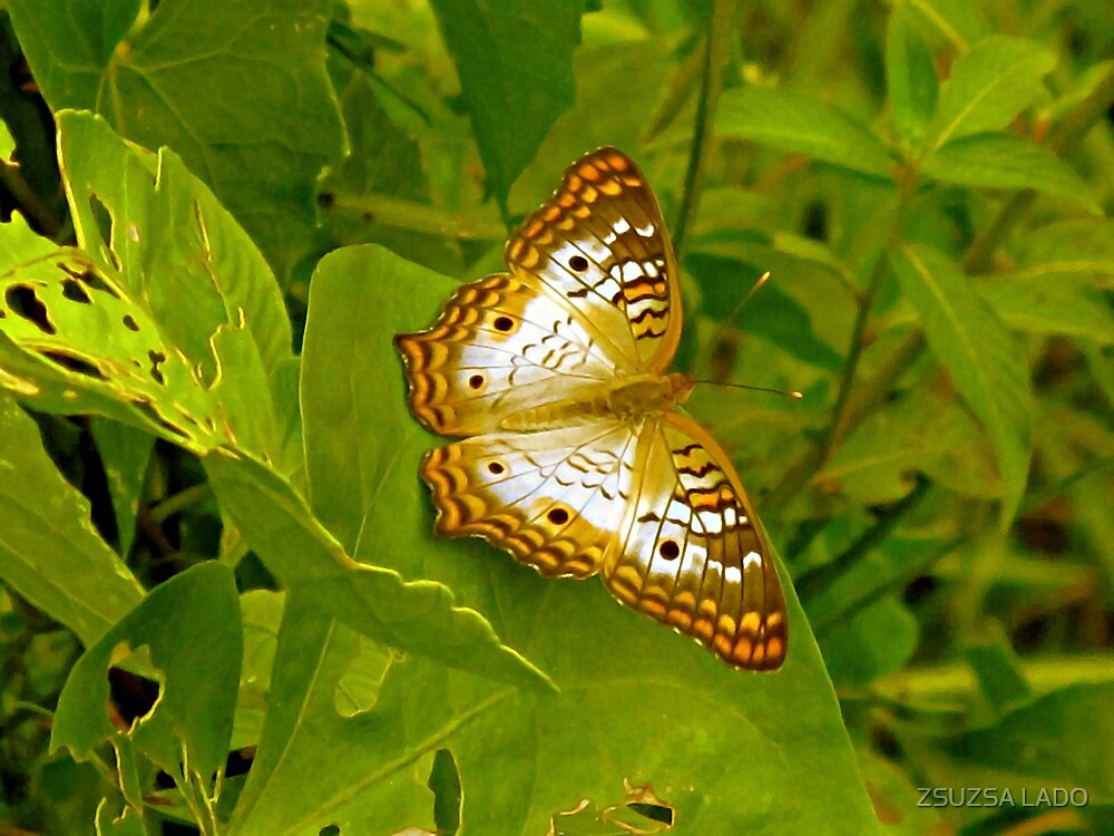 Butterfly at the Everglades by ZSUZSA LADO