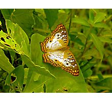 Butterfly at the Everglades Photographic Print