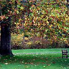Fall Kaleidoscope by cebrfa
