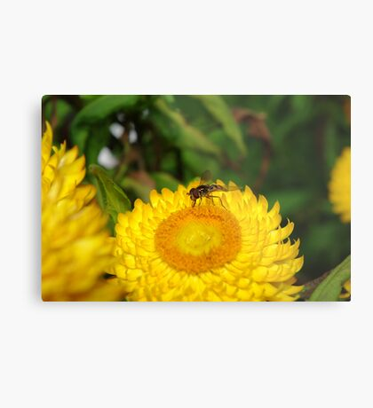 Flower and friend Metal Print