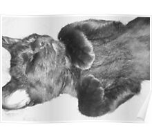Adorable Sleeping Kitten B&W Poster