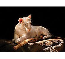 Leopard -  A baby snow Leopard Photographic Print