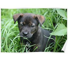 Lilly - rescue puppy Poster