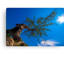 The tree under direct sunlight and blue sky Canvas Print