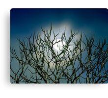 Moon Stalk Canvas Print
