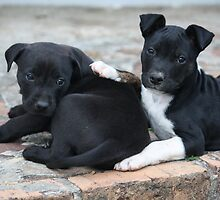 NSW Animal Rescue Foster Puppies by tdierikx