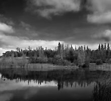 natures mirror by Di Dowsett