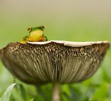 Toadstool by Donna Rondeau