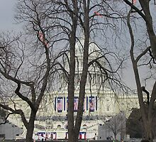 """Capital Building Through a Veil of Trees"" by Lauren Heather Lay"