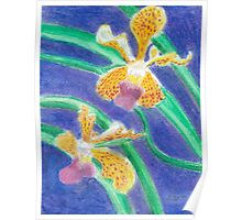Orchid - Oil Pastel Poster