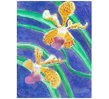 Orchid - Oil Pastel Photographic Print