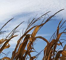 Tassels in the sky by Lisa Bianchi