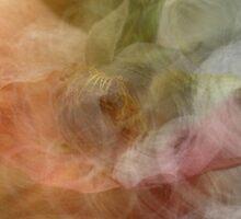 Rose in the mist by Julie Tomkins