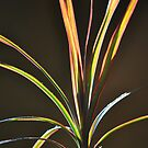 Sunny Spikey Plant by April Anderson