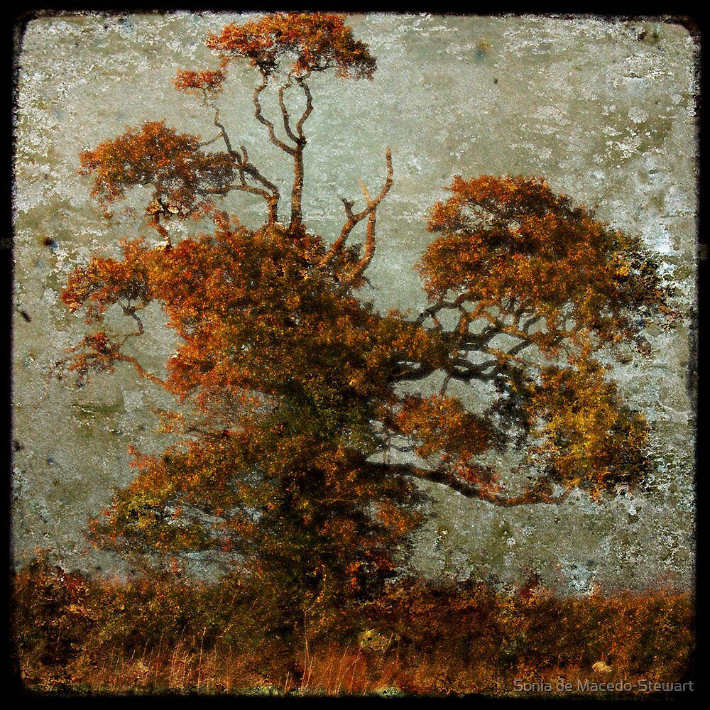 estampe tree by Sonia de Macedo-Stewart