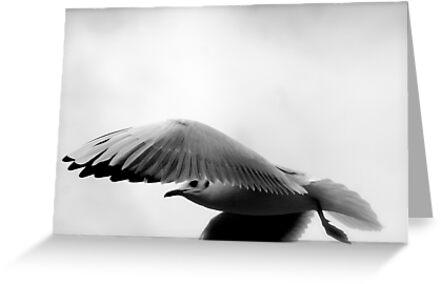 Seagull by Richard Pitman