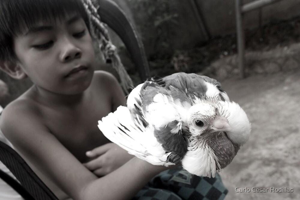 A Boy And His Bird by Carlo Cesar Rodillas