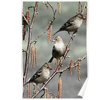 Girls Day Out - Three Chaffinches Shoot the Breeze Poster