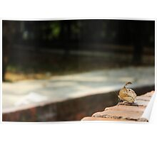 butterfly photography Poster