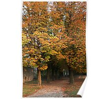 Colors of autumn at sunset Poster