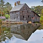 Reflections on a Pond - Yates Millpond, NC by Michael Rubin