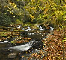 Dingmans Creek In Autumn by Stephen Vecchiotti
