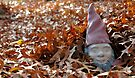 Elusive Yard Gnome Enjoys Fall Cover by Ainsley Kellar Creations