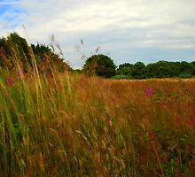 Meadow grass - Wyre Forest Nature Reserve by kingfisher