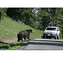 Grizzley in Yellowstone 2 Photographic Print