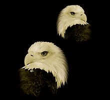 American Eagles by Louise Fahy