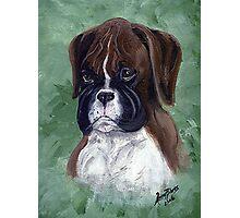 Boxer Puppy Dog Portrait Photographic Print