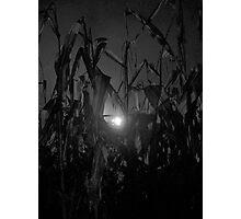 corn maze Photographic Print