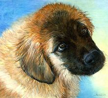 Leonberger Puppy Dog Portrait by Oldetimemercan