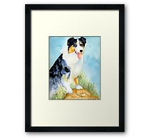 Australian Shepherd Dog Portrait Framed Print