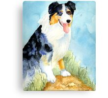 Australian Shepherd Dog Portrait Canvas Print